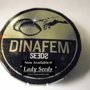 Lady Seeds Sells Dinafem Seeds