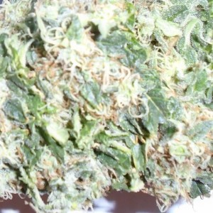 Size Matters Regular, Feminized and Auto Flower Seeds Available at www.ladyseeds.com