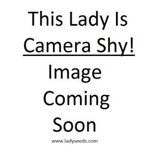 Lady seeds