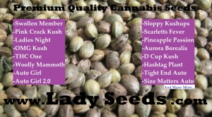 Lady Seeds Premium Cannabis Seeds