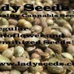 Order at www.ladyseeds.com