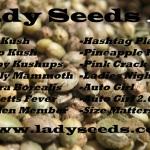 Ladyseeds seed list